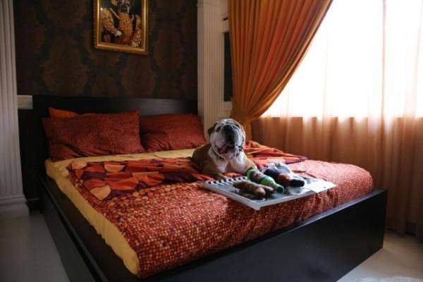 The Wagington Luxury Pet Hotel @ Loewen by Dempsey Hill